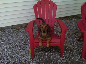 Boarding_Dog Red Chair